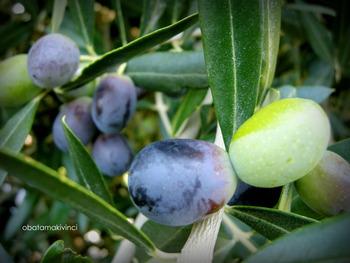 Olive attaccate la simmetria