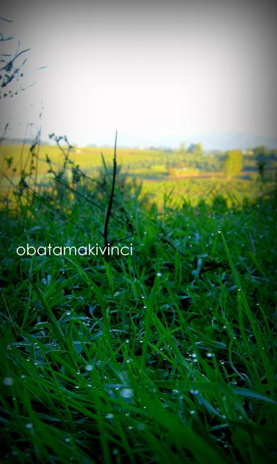 erba bagnata nell'autunno