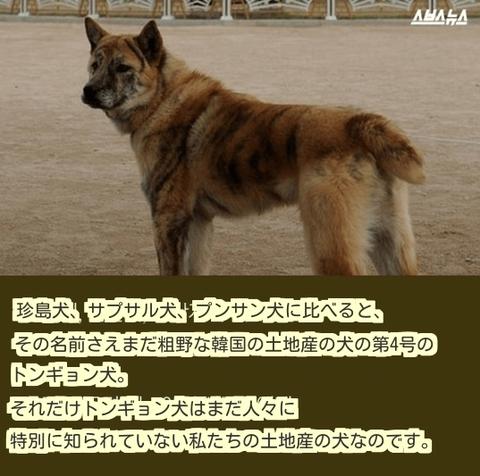ダウンロード (13) (1)