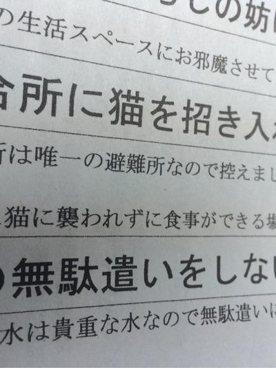 IMG_7559[1]