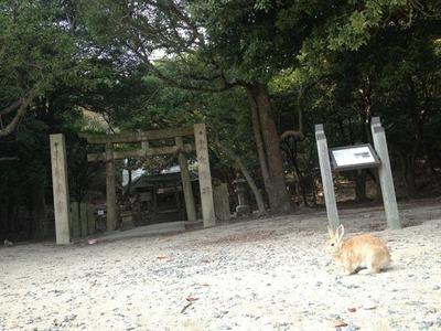 大久野島神社とうさぎ