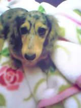 きららと毛布