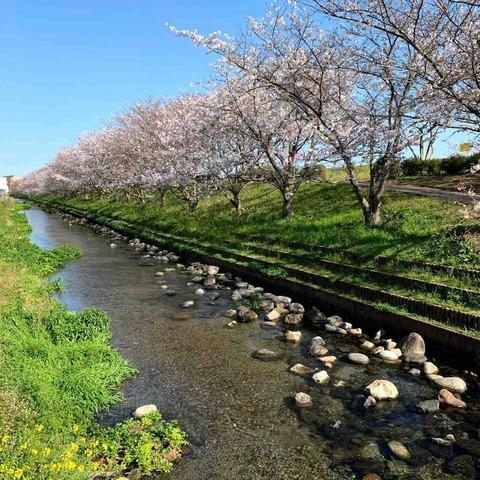 赤坂桜づつみ公園