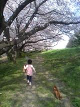 レッドと娘と桜と・・・