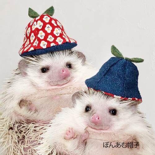 A-ぼんあむ帽子
