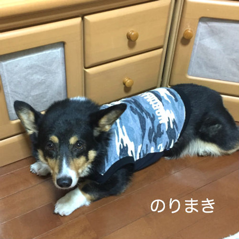 norimaki_1