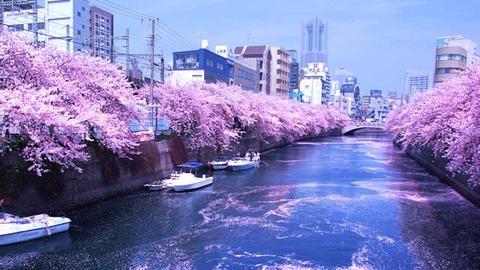 oookagawasakura2019