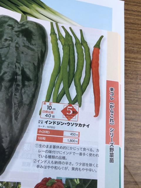 indojinusotsukanai2020-1