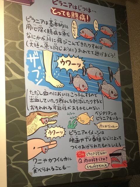 shinagawasuizokukan-tenji-kawaii2019