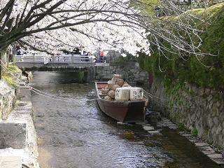 20114sakura 045