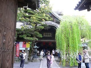 20114sakura 090