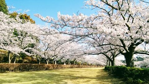 20180330鎌倉霊園