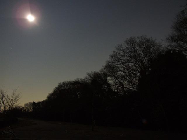 月夜の斜面林
