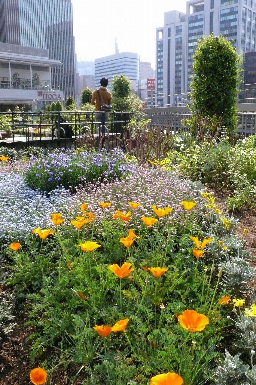 春を楽しむ都心の庭(有楽町)