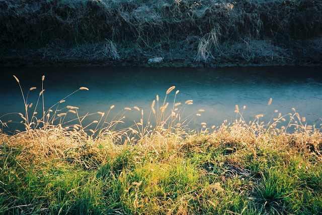 田んぼの小川にも、薄氷、冬の日差しが・・・