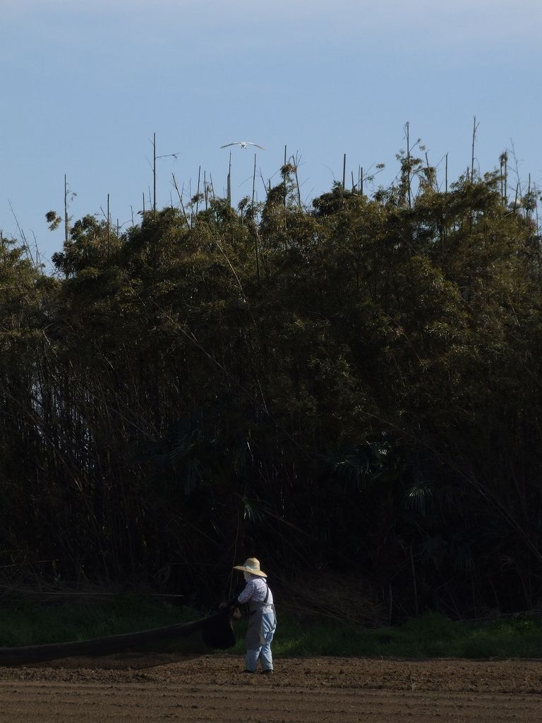 旧・シラサギのコロニー(難波田城公園に隣接)