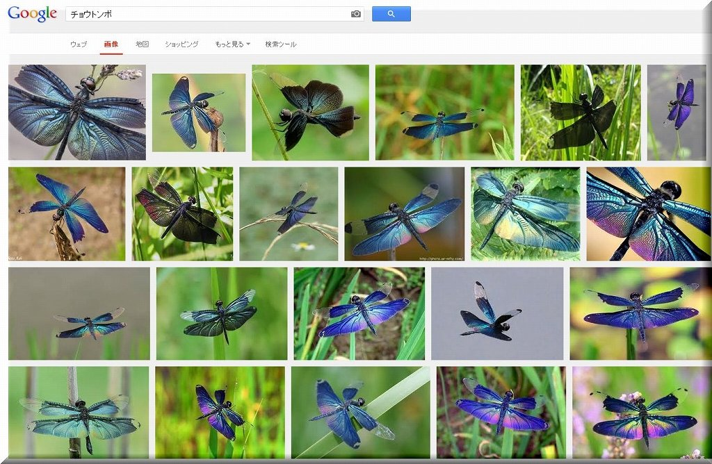s-Google「チョウトンボ」