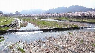 霞城公園・大手門の夜桜&馬見ケ崎川の桜(山形市)