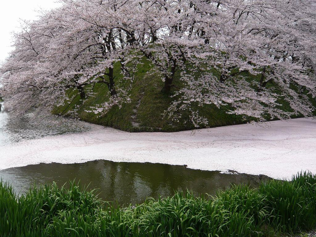 霞城公園の桜(山形市)