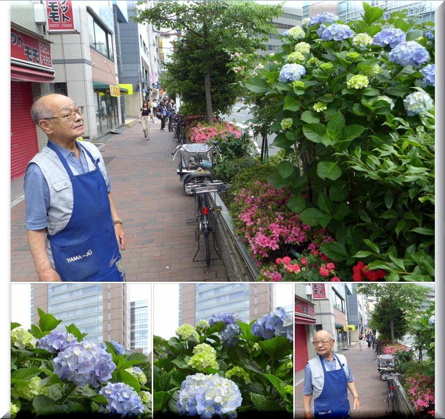 FB:通りに咲くアジサイ