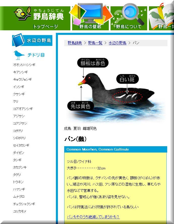 バン【野鳥辞典より】