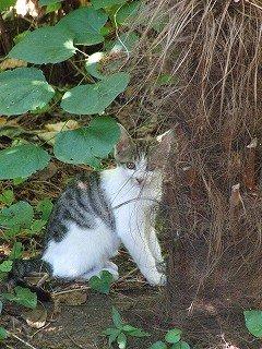 """ネコの避暑 """"温泉人(おふろうど)の森"""""""