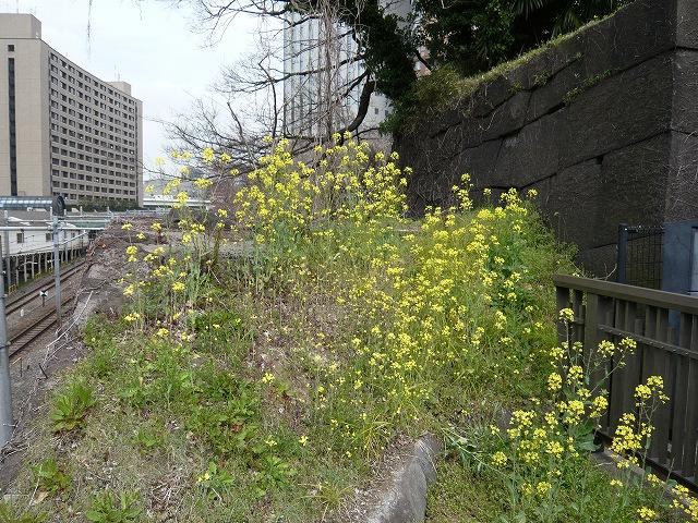 花より・・・、花もまた(飯田橋)