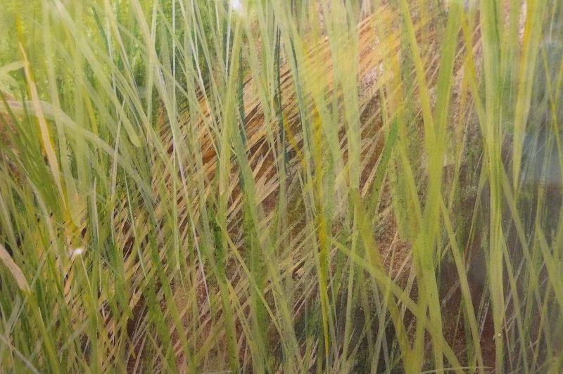 自然の在り様を描く :波暮旅二 画伯(テンペラ画)�