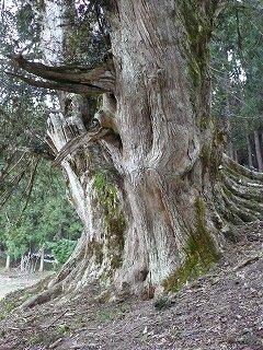 巨樹に、いのちの在り様を見る