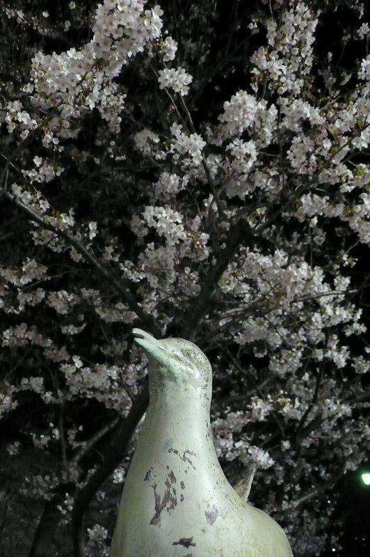 桜見る(RAMLA)