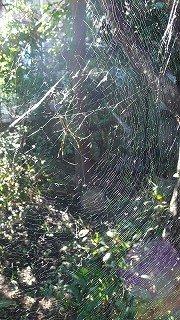 クモの糸・クモの巣 : 温泉人(おふろうど)の森にて