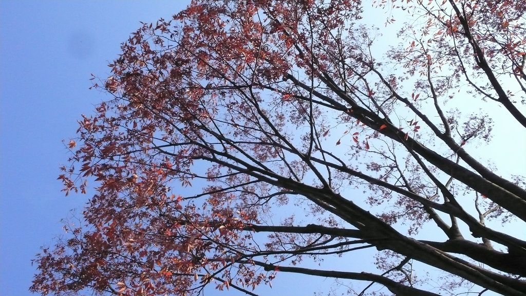 樹、見上げる