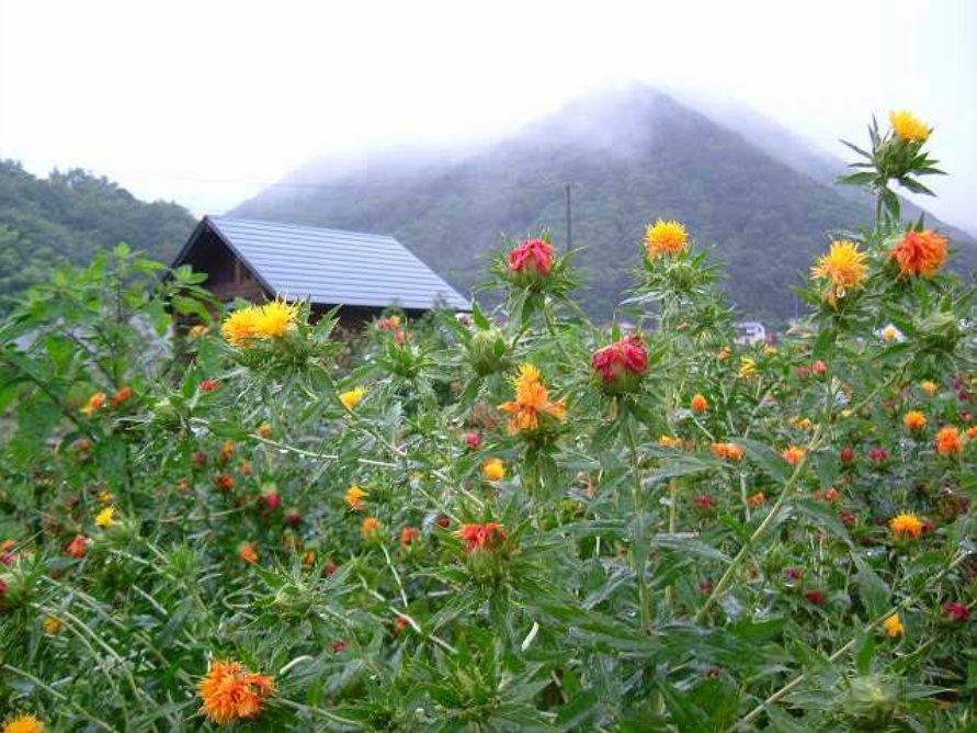 紅花畑(たかせ)
