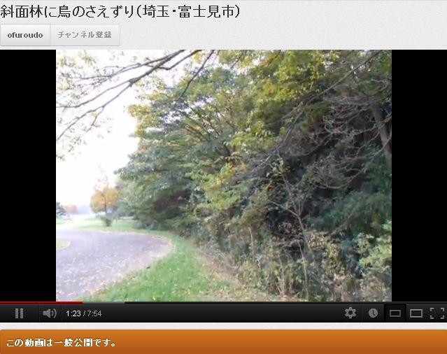 斜面林に鳥のさえずり(埼玉・富士見市)