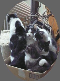 温もり:温泉人(おふろうど)の森の猫