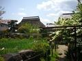 金剛寺の庭