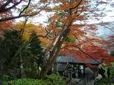 登廊付近の紅葉