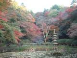 蓮池の紅葉1
