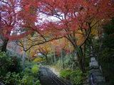 登廊の上の紅葉