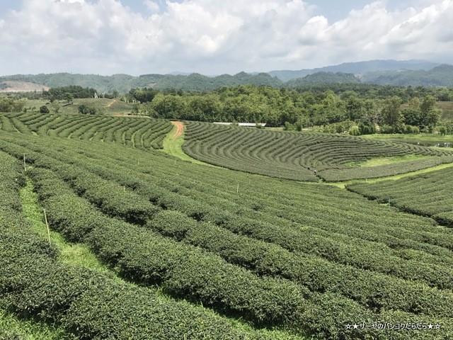 Choui Fong Tea 茶畑 チェンライ (3)
