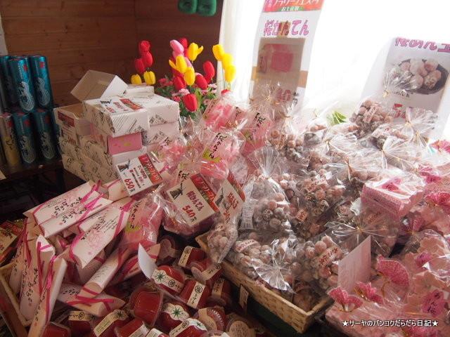 佐倉 チューリップ Sakura Tulip Festa