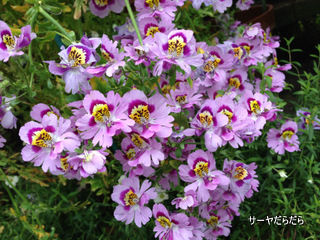 20121119 winter garden 10