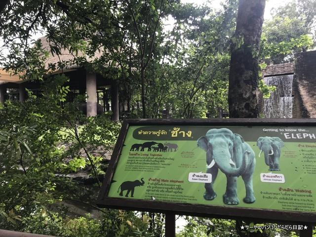 Dusit Zoo ドゥシット動物園 タイ カバ 最古 (22)