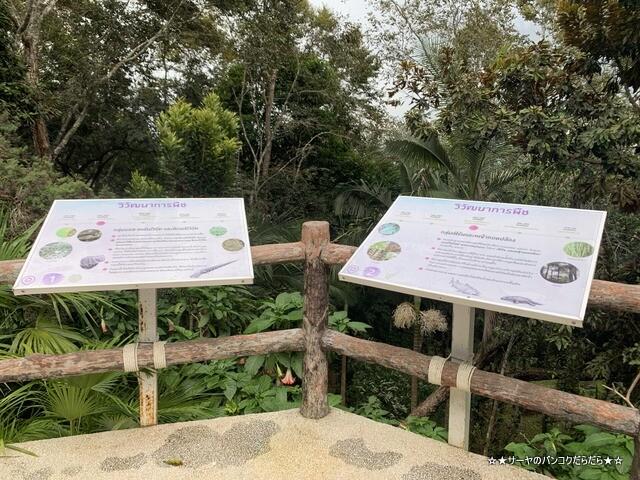 メーファールアン植物園 Mae-Fah-Luang-Arboretum (4)