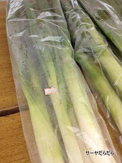 20120415 tulip 6