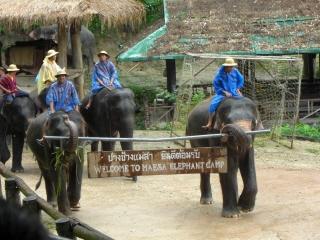 20081009 elephant camp 3
