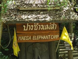 20081009 elephant camp 1