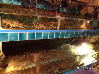 20120615 marina 10