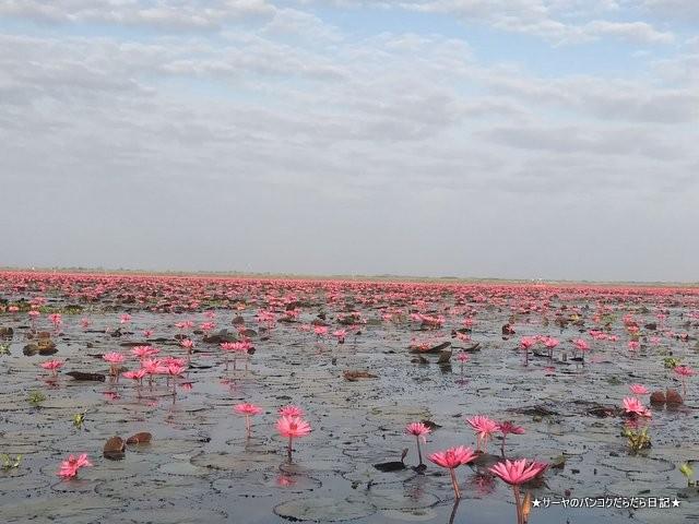 赤い蓮の池 Red Lotus Lake 絶景 2019 オススメ (11)
