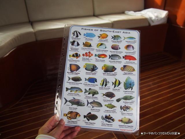 04 island trip pimalai krabi (10)